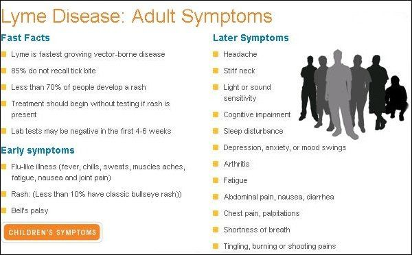Adult lyme disease Symptoms