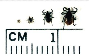 early stage treatment for lyme disease